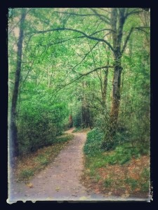 gorgeous path in woods