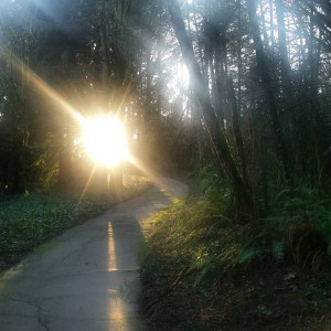 parrish priest light on road in lake oswego