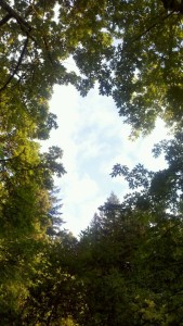 sky thru canopy of trees