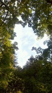 sky thru canopy of trees